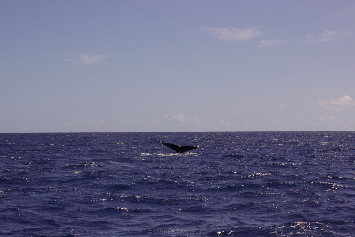 Whale watching São Miguel Island Where Two Go To