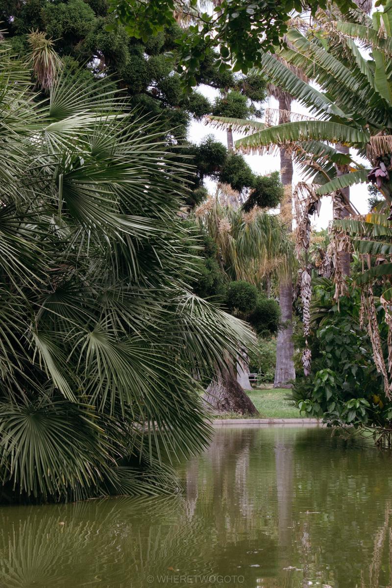 The Tropical Botanical Garden Of Lisbon A Hidden Green Pearl
